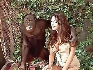 Porno Animal