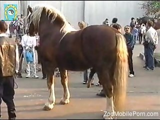 guy looks at the stallion's cock and gets very aroused
