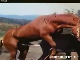 Man gets aroused watching two horses fuck in the outdoor