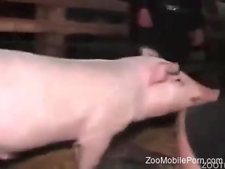 Milf fucked by the pig and made to reach the orgasm