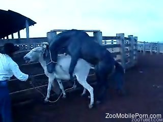 Stallion fucks donkey while horny man stands and watches
