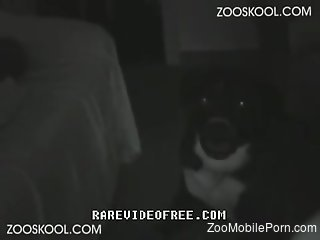 Raw scenes with a nude woman trying dog cock in her twat