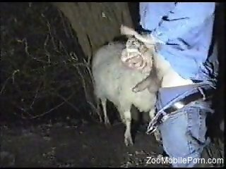 Canadian tuxedo dude face-fucking a submissive sheep