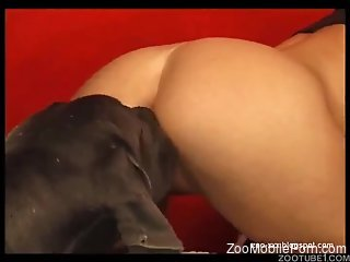 Good-looking babe bends over to get her pussy fucked
