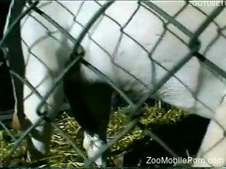 animals xxx